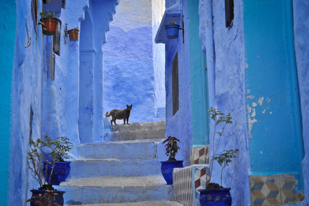 Марокко. Шефшауен. (Mario Tome)