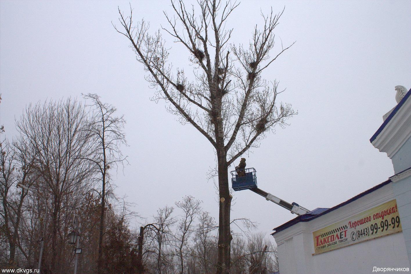 Парк ВГС - обрезка деревьев