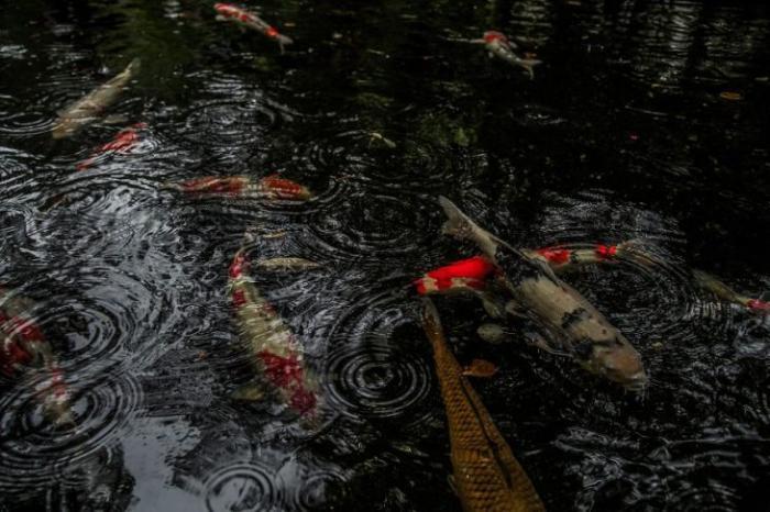 Япония в сезон дождей