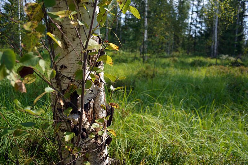 леса 26.jpg
