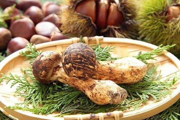 Самые интересные и необычные места для сбора грибов в разных странах 0 12d1a6 aa84bd84 orig