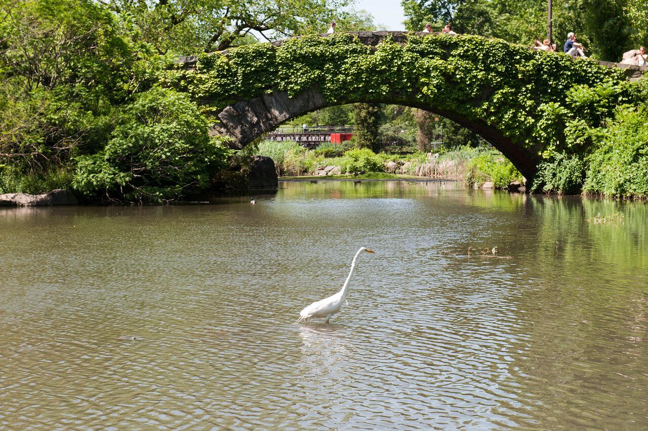 Нью Йорк. Центральный Парк.