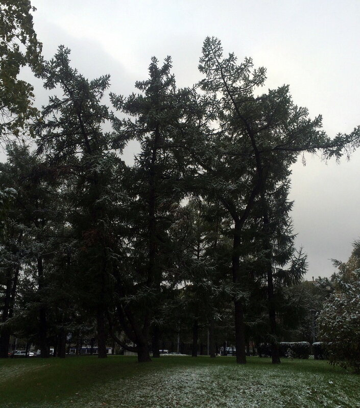 зеленые листвяки.jpg