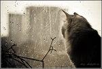Серые нити дождя