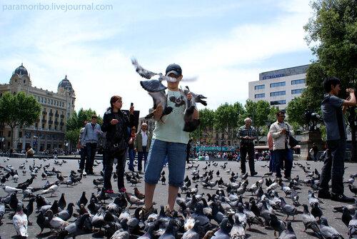 Налетай - семечки раздают! / площадь Каталонии, Барселона