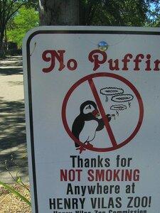 no smoking birds, wisconsin