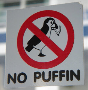 no smoking birds again =)
