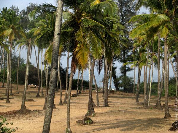 Пальмы. Море. Гоа.