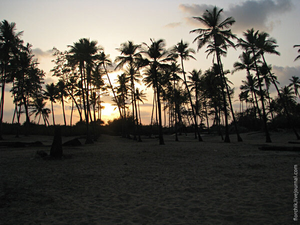 Пальмы. Закат в Гоа.