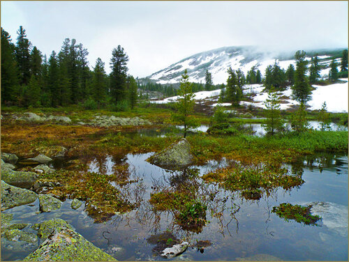 Тайга и горы