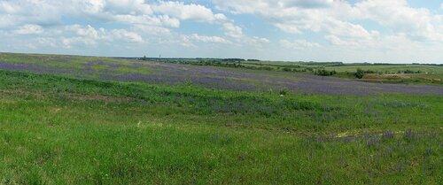 Синие поля