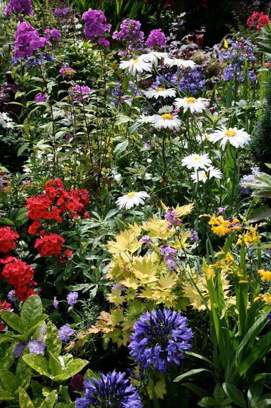 Низкорослые однолетние цветы фото и
