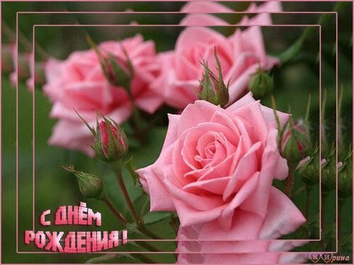 С днем рождения! Пышные розовые розы открытка поздравление рисунок фото картинка