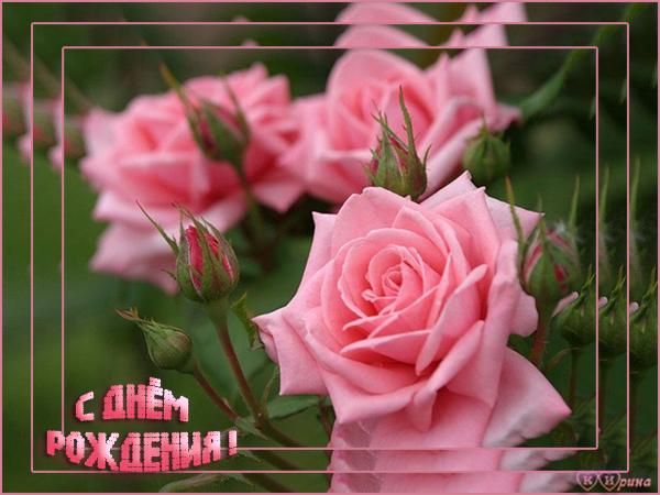 С днем рождения! Пышные розовые розы