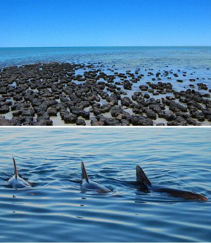 австралия, акулья гавань
