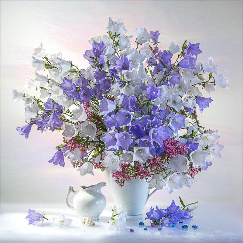 Зачаруют тебя полевые цветы