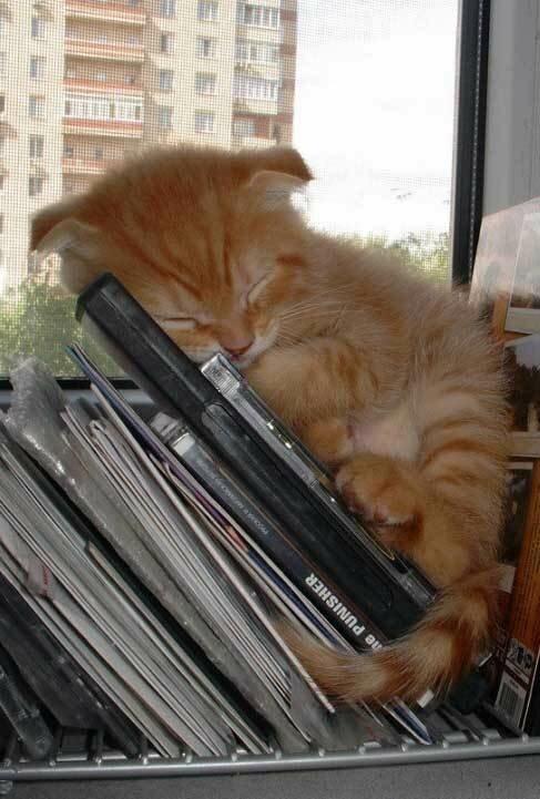 Оригинально спящие коты