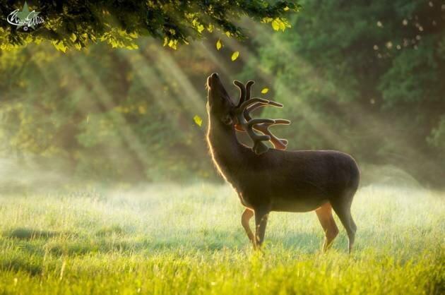 Животные, которые радуются лету