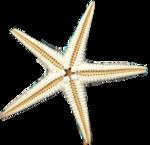 RKROE_seaspirit_starfish.png