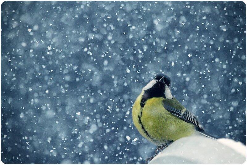Snowfall by Natasha Garnelis