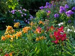 Hemerocallis, phlox and hydrangeas give their best. A snapshot from our garden in July. Zurich, Switzerland