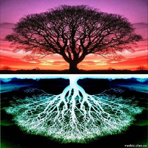 картинки древо жизни