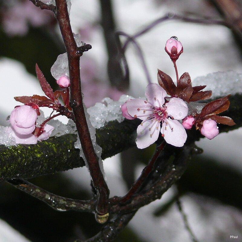 весна 2010