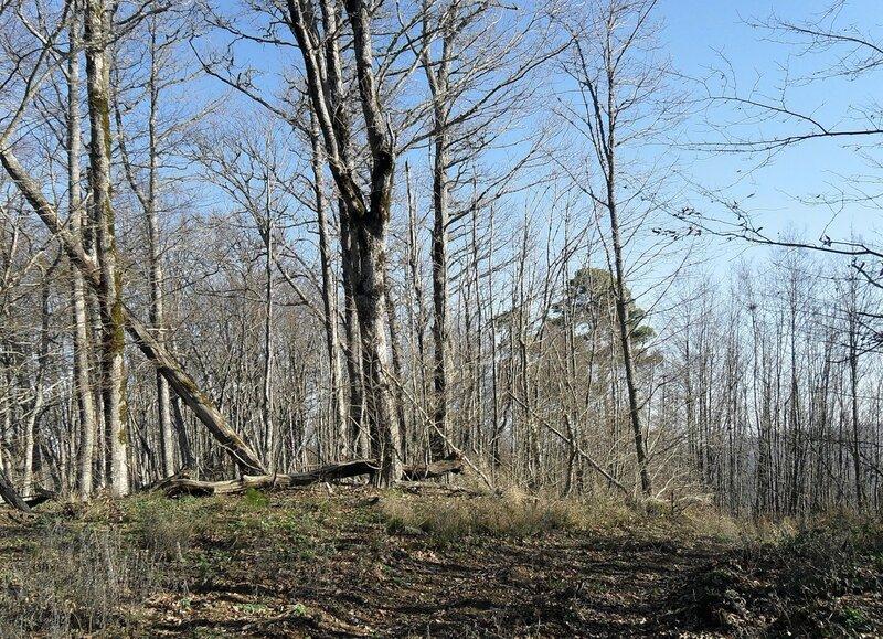 Лес на вершине