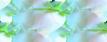 роза и ракушка(окантовка)