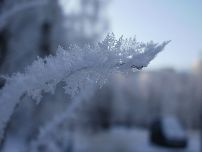 морозный иней