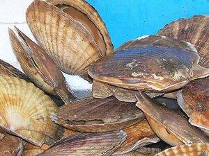 За полгода в Приморье выращено 4757 тонн гребешка, 1727 тонн - трепанга, устрицы - 72 тонны...
