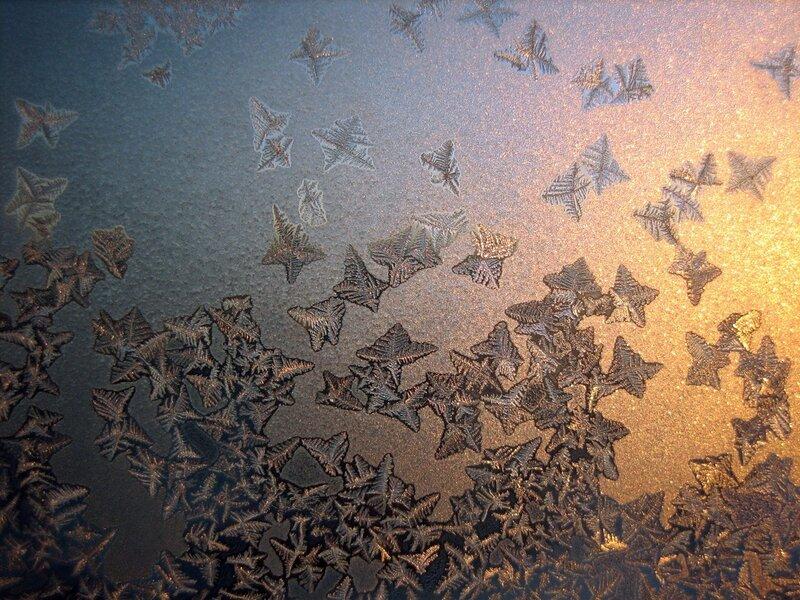 Золотистых бабочек рой