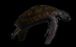 морская черепаха (8).png