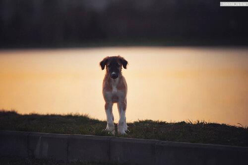 пофотографирую Ваших собак! 0_15d61c_2fa05721_L