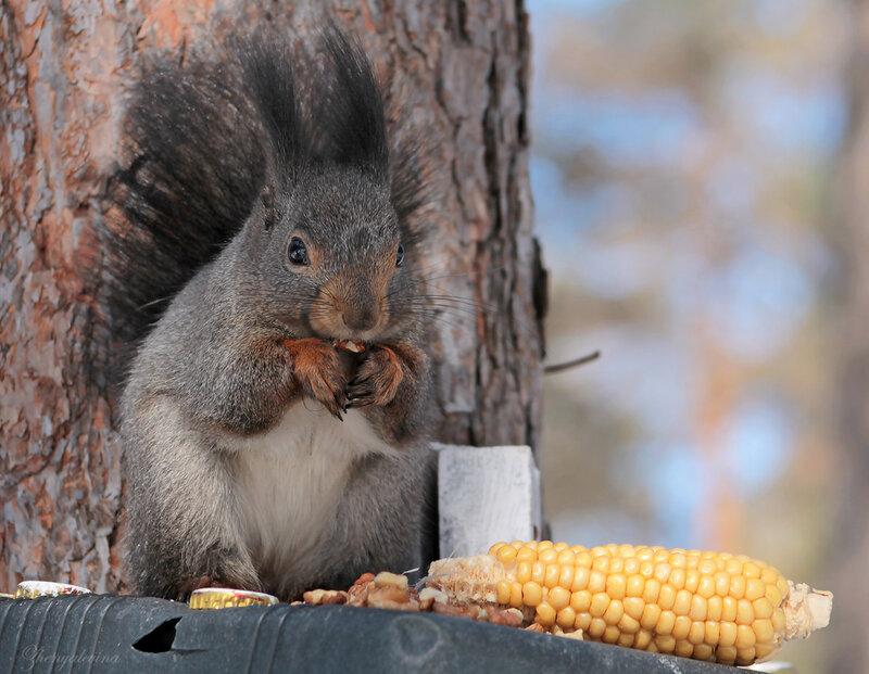 Не...этот желтый орех мне не понравился!