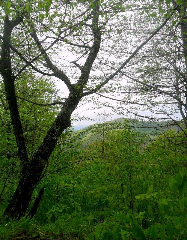 В лесу ... SAM_6912.JPG