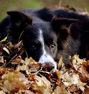 Осень кончается...