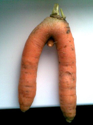 Морковь 2010
