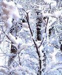снегопад 18 ноября 2010
