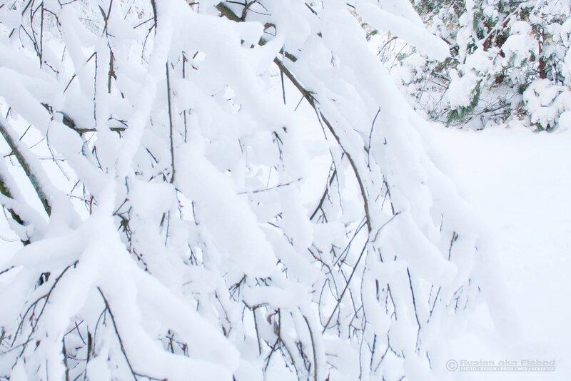"""Зимняя фотосказка. МО, Ногинский район, турбаза """"Боровое"""""""""""