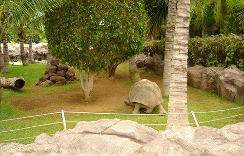 Лоро-парк на острове Тенерифе. Невежливая черепаха.