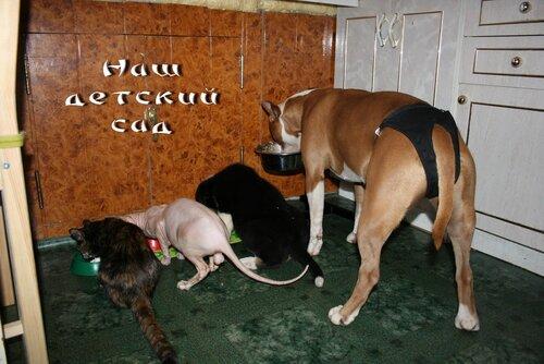 Собаки и кошки.