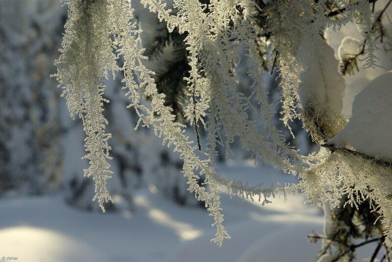 Солнце, горы, белый снег,