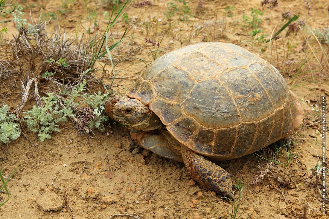 черепаха в долине каменных шаров Торыш