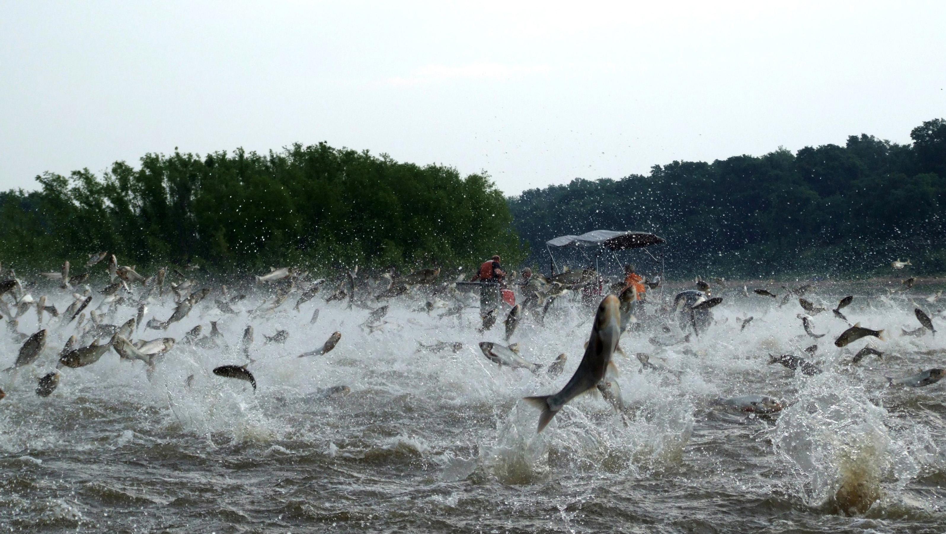 Когда рыбалка это еще и охота!