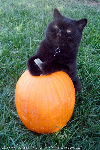 тыква и черный кот