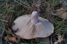 http://img-fotki.yandex.ru/get/5302/15842935.ab/0_cc621_2ca6741a_orig.jpg