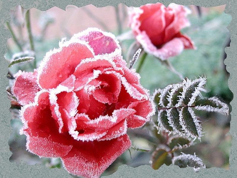 http://img-fotki.yandex.ru/get/5302/206660144.14/0_16f0ce_74a6998c_orig.jpg