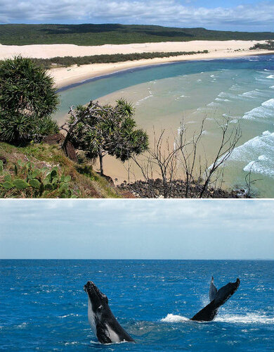 австралия, остров фразера