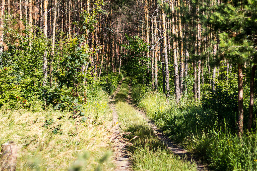 Дорога на Кучуры